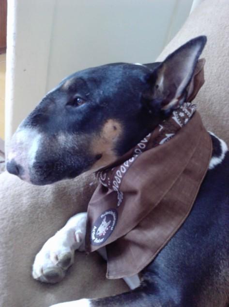buddy in his arthur scarf