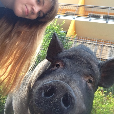 the pig and I