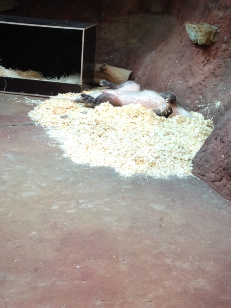 prazska zoo hrabac