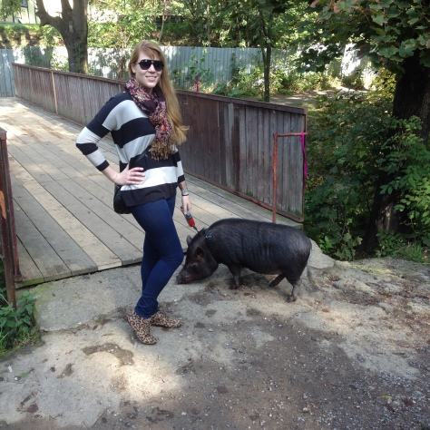 walking Mr. Pig