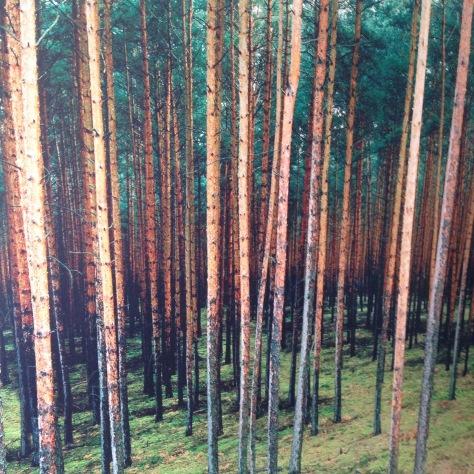 tapeta lesa forest