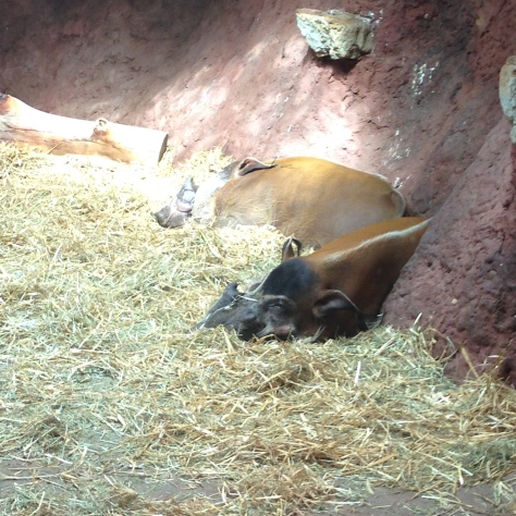 stetkouni prazska zoo